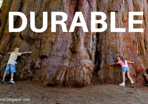 Kids with arms around huge durable Sequoia tree.